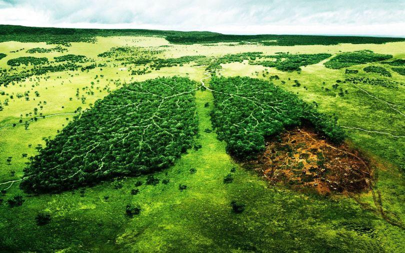 Déforestation poumons